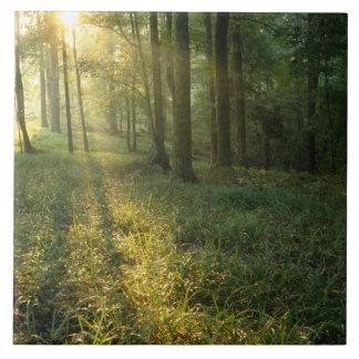 Salida del sol a través del bosque del roble y de  azulejo cuadrado grande