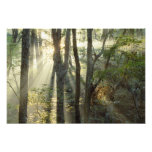 Salida del sol a través del bosque del roble y de  fotos