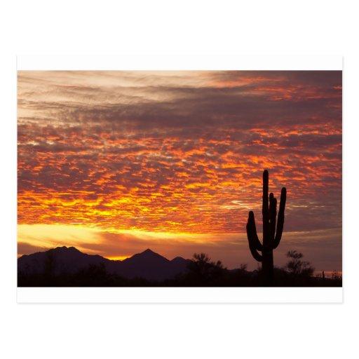 Salida del sol de Arizona noviembre con el Saguaro Postales