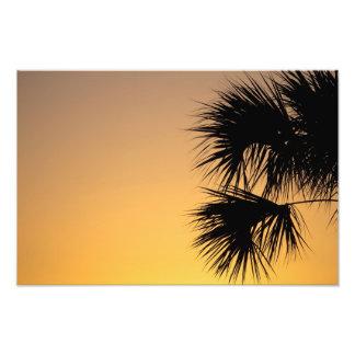 Salida del sol de la palmera, la Florida Fotografías
