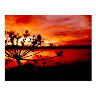 Salida del sol del apio salvaje tarjetas postales