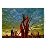 Salida del sol del campo de maíz tarjetas