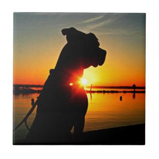Salida del sol del pitbull azulejos