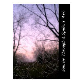 Salida del sol del Web de araña Tarjetas Postales