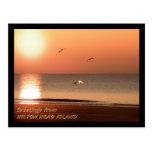 Salida del sol, delfínes y gaviotas postal
