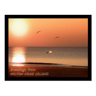 Salida del sol, delfínes y gaviotas tarjetas postales
