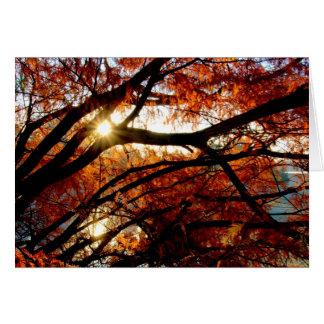 Salida del sol en el arboreto de $cox en Dayton, O Felicitaciones