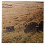 Salida del sol en el bisonte azulejo cerámica