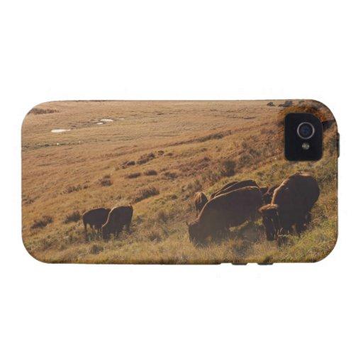 Salida del sol en el bisonte Case-Mate iPhone 4 carcasas