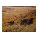 Salida del sol en el bisonte postal