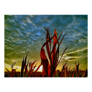 Salida del sol en el campo de maíz póster