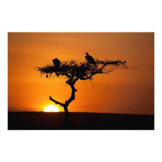 Salida del sol en el Masai Mara, Kenia Impresiones Fotográficas