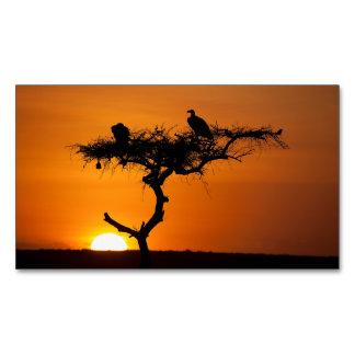 Salida del sol en el Masai Mara, Kenia Tarjetas De Visita Magnéticas (paquete De 25)
