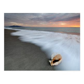 Salida del sol en la playa y Shell Tarjeta Postal
