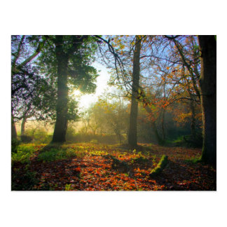 Salida del sol en postal del bosque del otoño