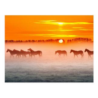 Salida del sol sobre un campo de niebla de postal