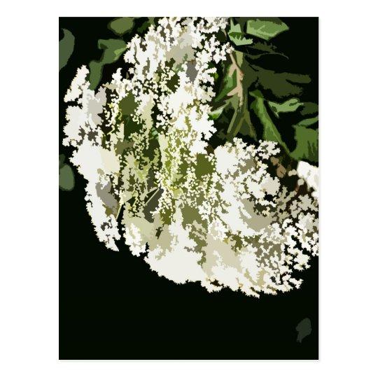 Salidas del corte de las flores blancas postal