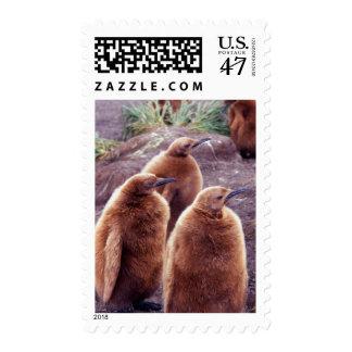 Salisbury Plain, South Georgia: Juvenile King Postage Stamp