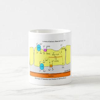 Saliva Gland Secretion Duct Diagram Classic White Coffee Mug