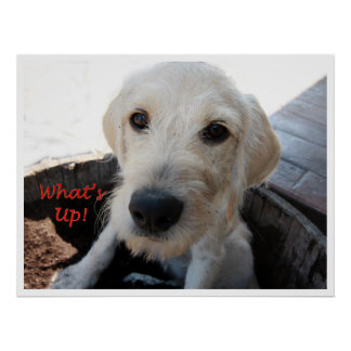 Sally Hey What's Up Poster