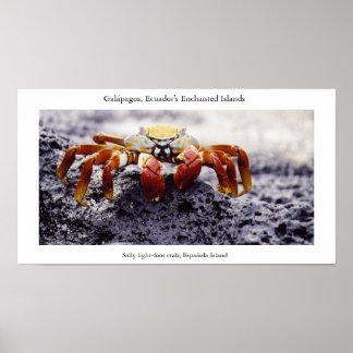 Sally light-foot crab, awaiting high tide poster