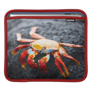 Sally lightfoot crab on a black lava rock iPad sleeve