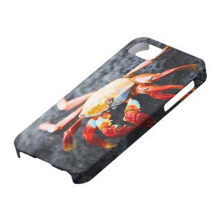 Sally lightfoot crab on a black lava rock iPhone SE/5/5s case