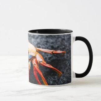 Sally lightfoot crab on a black lava rock mug