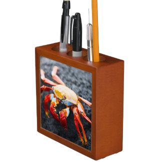 Sally lightfoot crab on a black lava rock Pencil/Pen holder