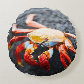 Sally lightfoot crab on a black lava rock round pillow