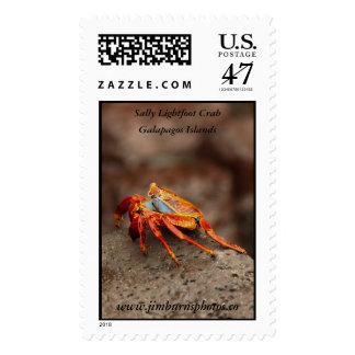 Sally Lightfoot Crab Stamp