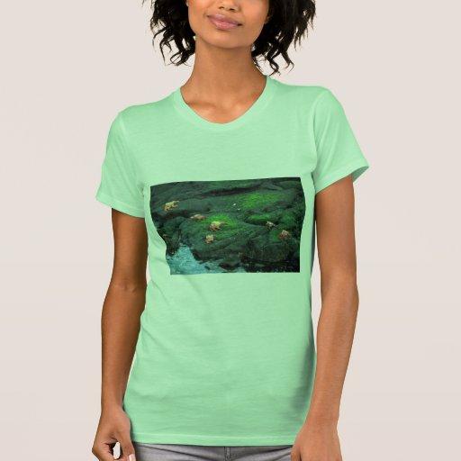 Sally Lightfoot Crabs Tee Shirt