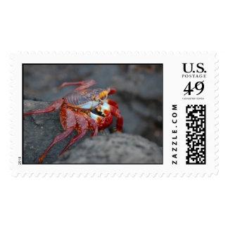sally lightfoot galapagos crab stamp