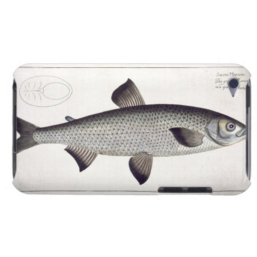 (Salmo Maraena) placa de color salmón XXVII de Funda Para iPod De Barely There