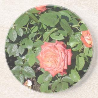 Salmon Colored Rose Beverage Coasters