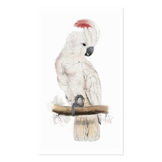 Salmon-Crested Cockatoo by Edward Lear Business Card