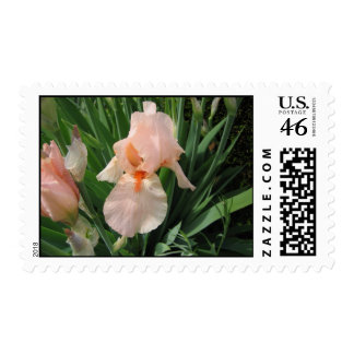 Salmon Iris 1 Postage Stamps