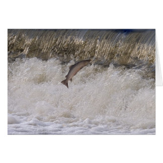 Salmon Jumping Card