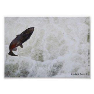 Salmon Jumping Tumwater Falls Photographic Print