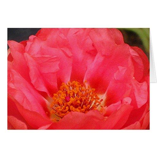 SALMON MOSS ROSE greeting card