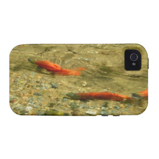 Salmon on the Run iPhone 4/4S Vibe Case