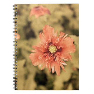 Salmon Opium Poppies on Green Notebook
