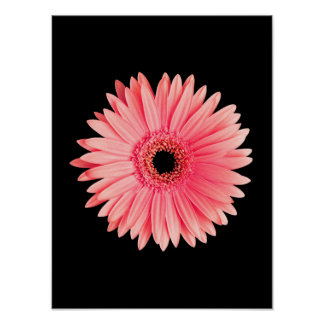 Salmon Pink Daisy on Black - Customized Daisies Poster