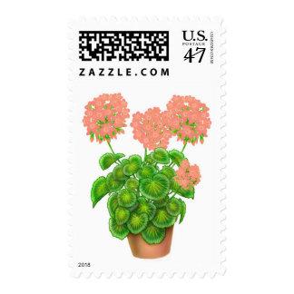 Salmon Pink Geraniums Postage