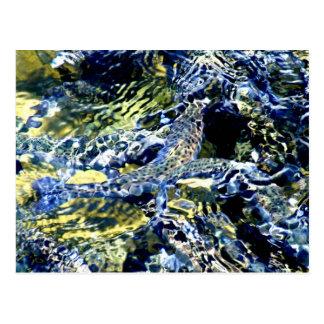 Salmon postcards