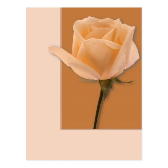 Salmon Rose Postcard