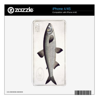 Salmon (Salmo Maraena) plate XXVII from 'Ichthyolo Decal For iPhone 4