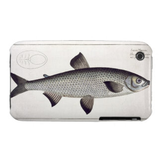 Salmon (Salmo Maraena) plate XXVII from 'Ichthyolo iPhone 3 Case