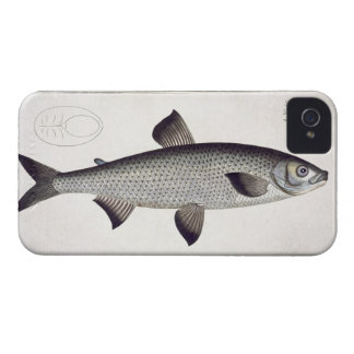 Salmon (Salmo Maraena) plate XXVII from 'Ichthyolo iPhone 4 Covers