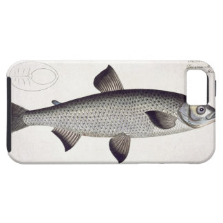 Salmon (Salmo Maraena) plate XXVII from 'Ichthyolo iPhone SE/5/5s Case